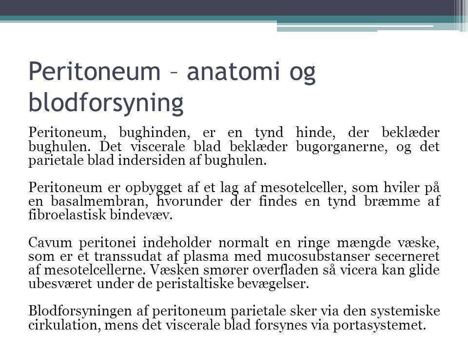 Peritoneum – anatomi og blodforsyning