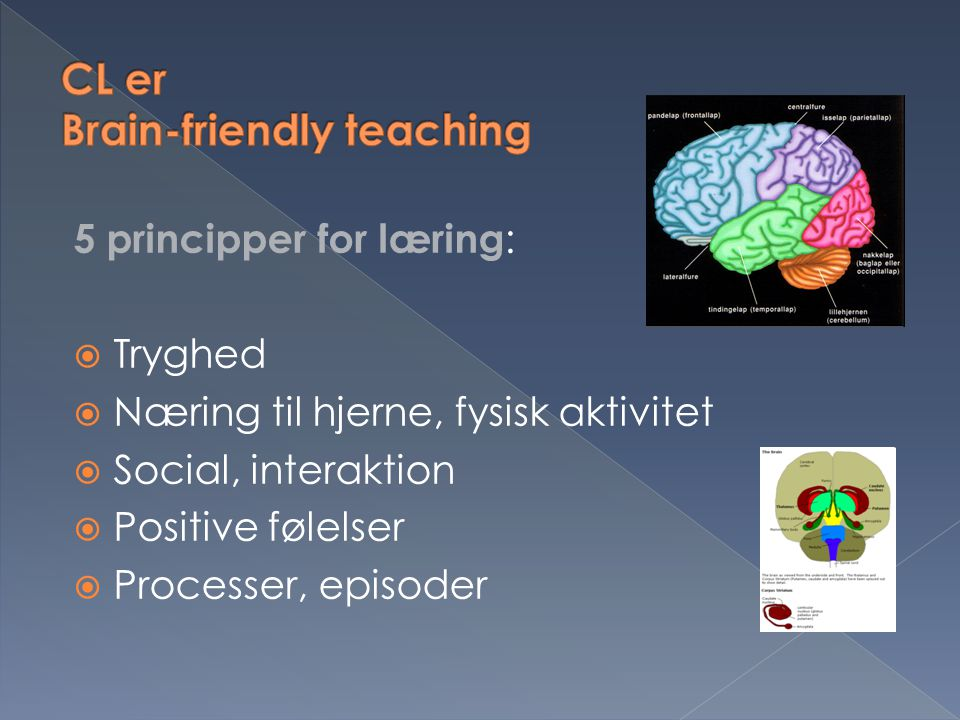 CL er Brain-friendly teaching