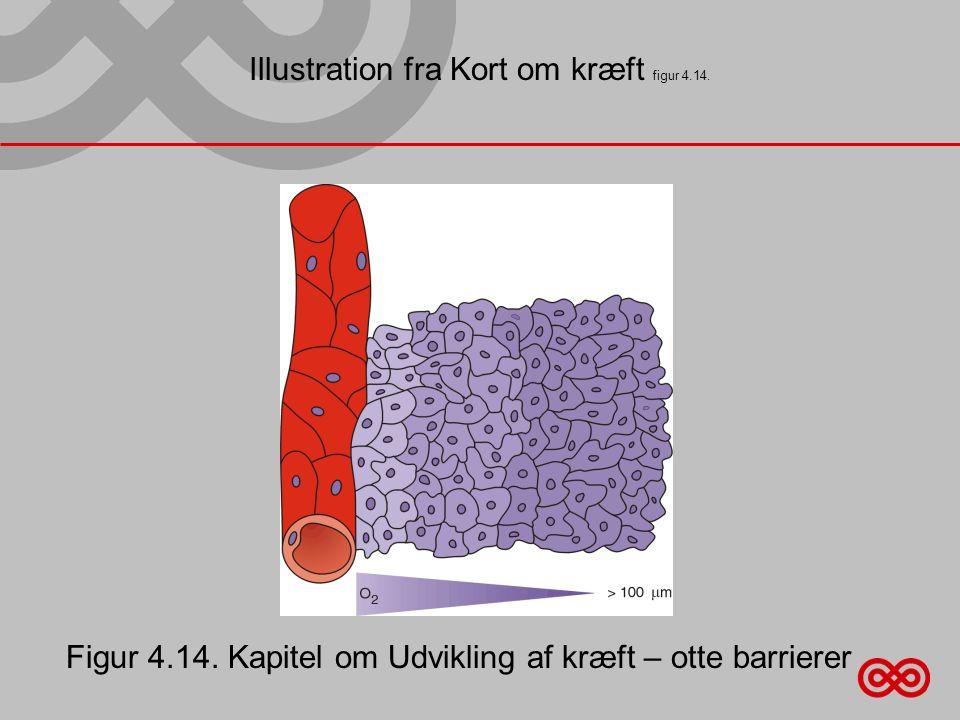 Illustration fra Kort om kræft figur 4.14.