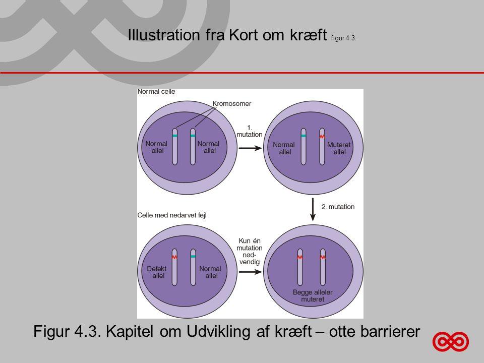 Illustration fra Kort om kræft figur 4.3.