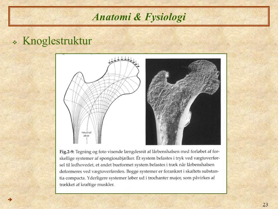 Anatomi & Fysiologi Knoglestruktur 