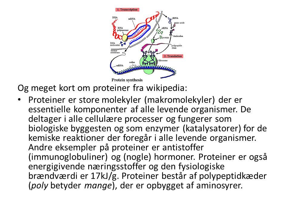 Og meget kort om proteiner fra wikipedia: