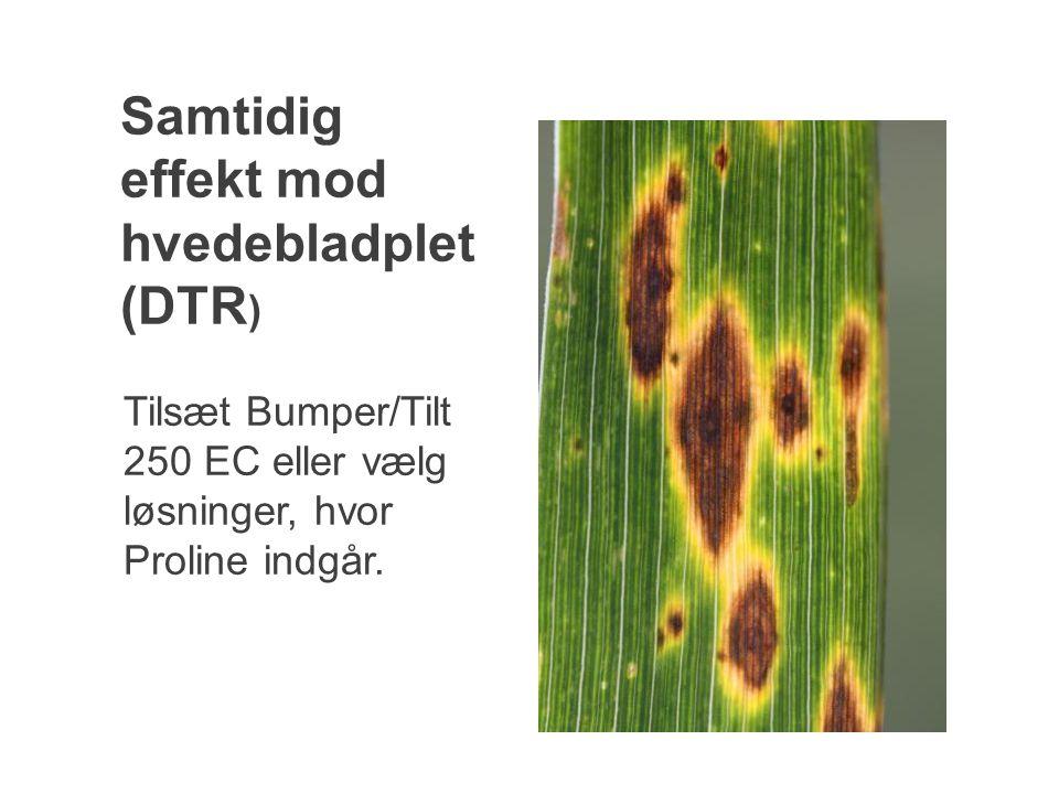 Samtidig effekt mod hvedebladplet (DTR)