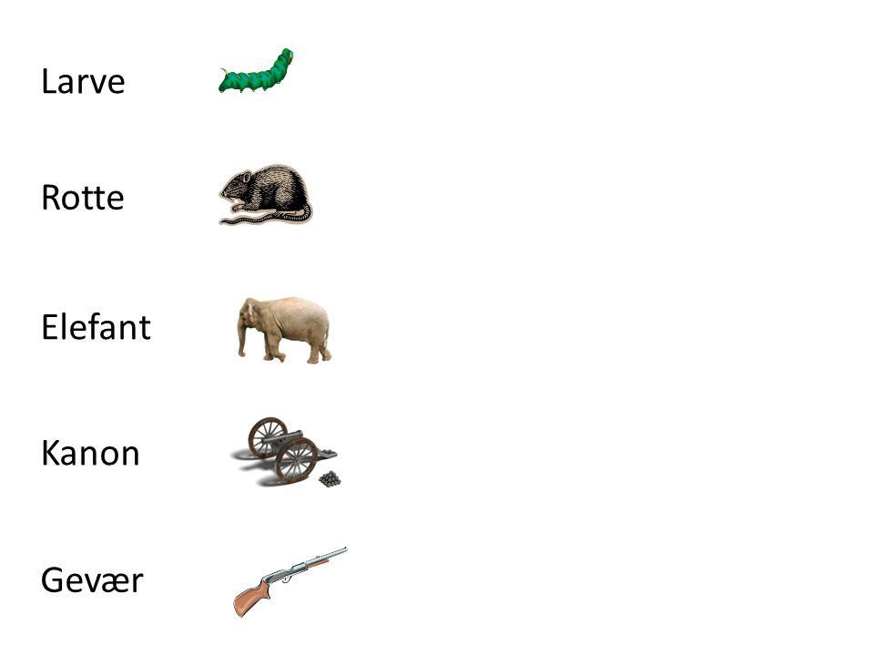 Larve Rotte Elefant Kanon Gevær