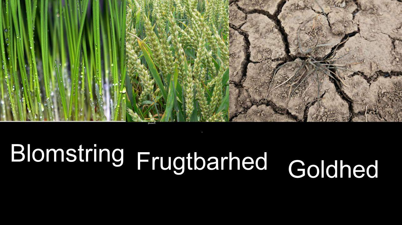 Blomstring ' Frugtbarhed Goldhed