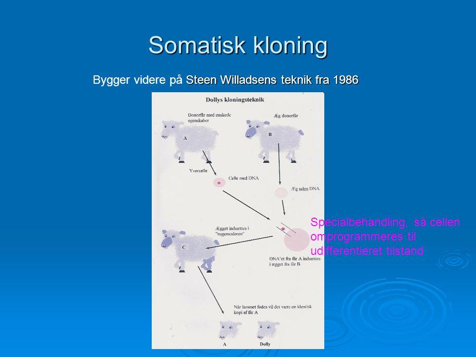 Somatisk kloning Bygger videre på Steen Willadsens teknik fra 1986