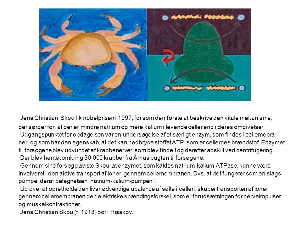 Jens Christian Skou fik nobelprisen i 1997, for som den første at beskrive den vitale mekanisme,