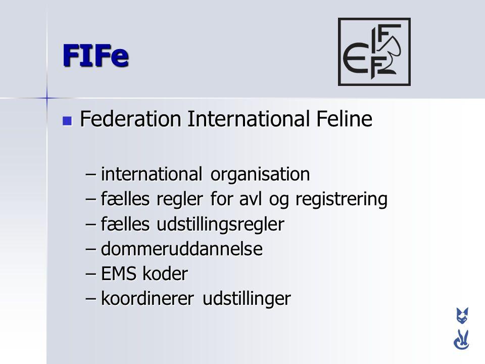FIFe Federation International Feline international organisation