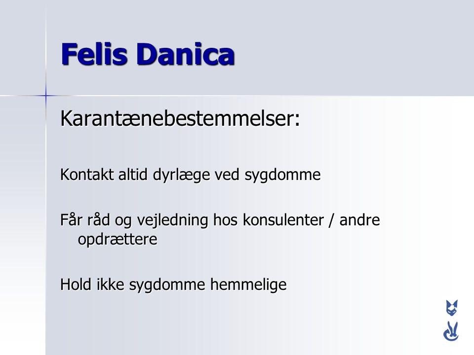 Felis Danica Karantænebestemmelser: Kontakt altid dyrlæge ved sygdomme