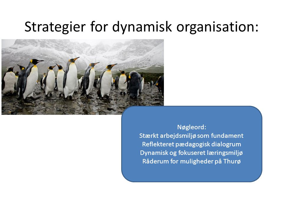 Strategier for dynamisk organisation: