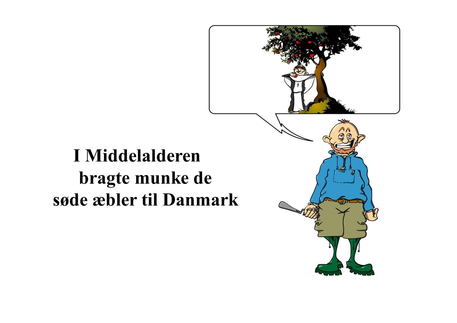 I Middelalderen bragte munke de søde æbler til Danmark