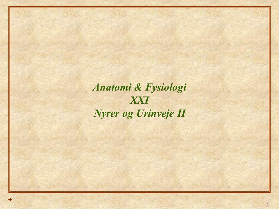 Anatomi & Fysiologi XXI Nyrer og Urinveje II