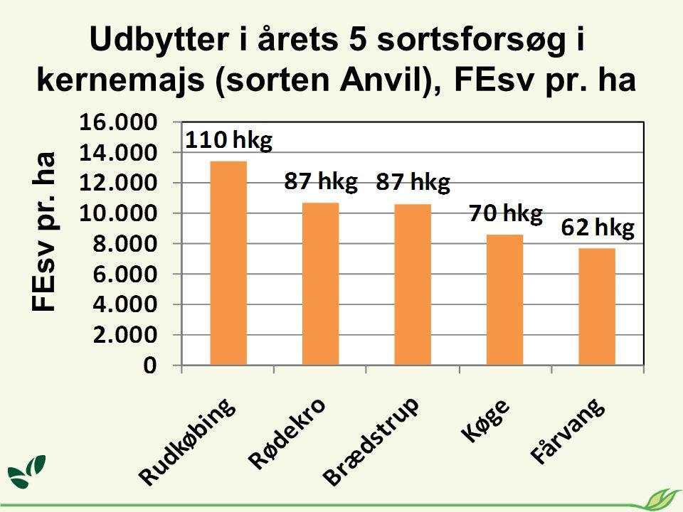 Udbytter i årets 5 sortsforsøg i kernemajs (sorten Anvil), FEsv pr. ha