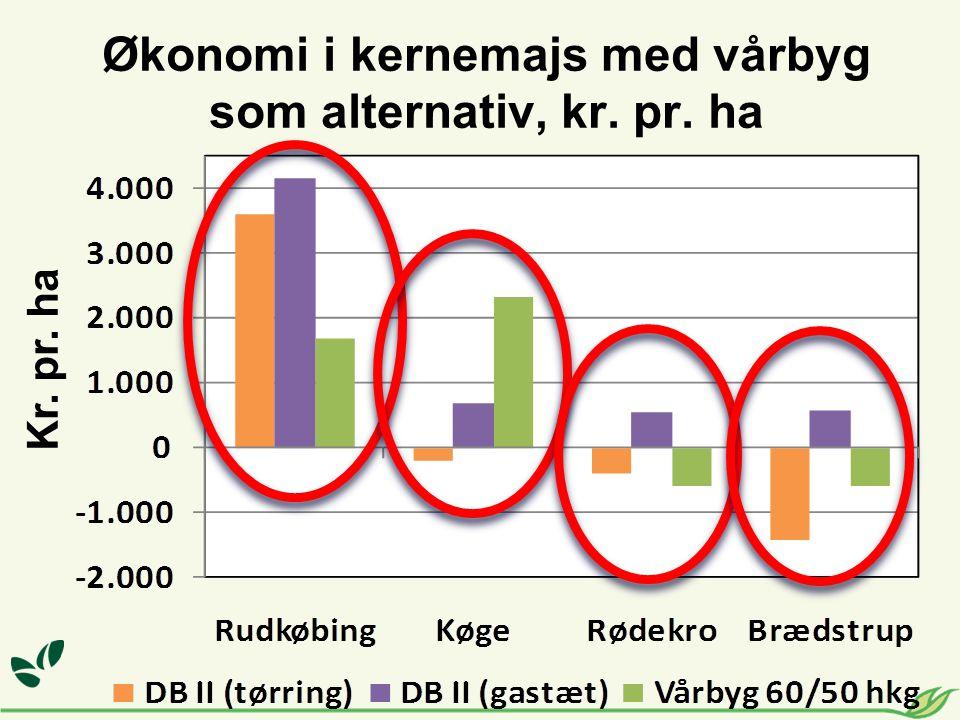 Økonomi i kernemajs med vårbyg som alternativ, kr. pr. ha