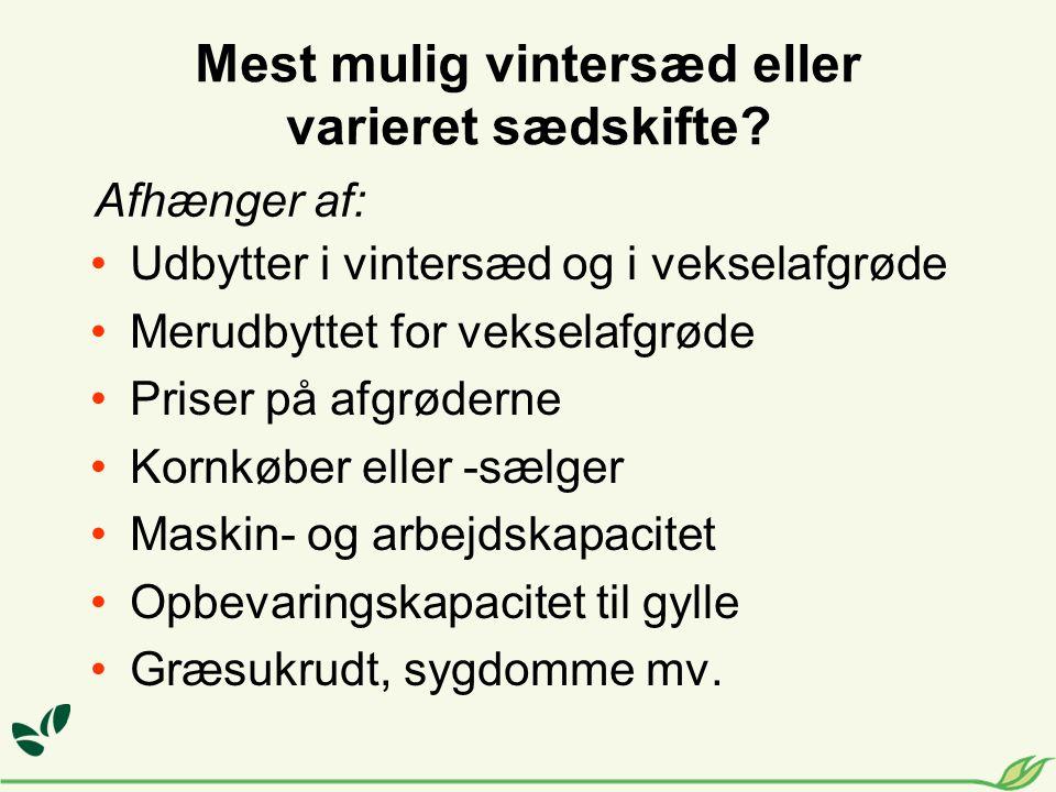 Mest mulig vintersæd eller varieret sædskifte