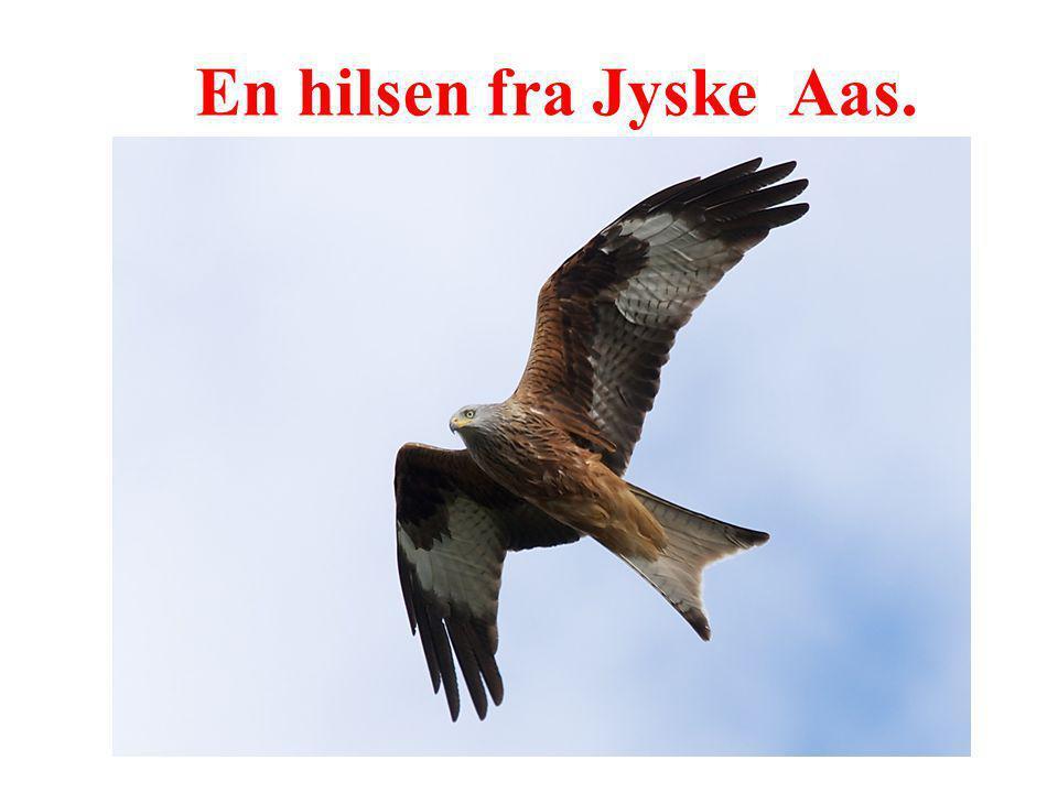 En hilsen fra Jyske Aas.