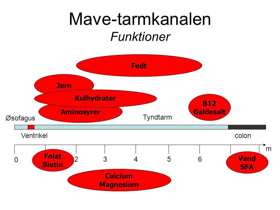 Mave-tarmkanalen Funktioner