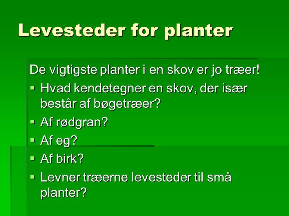 Levesteder for planter