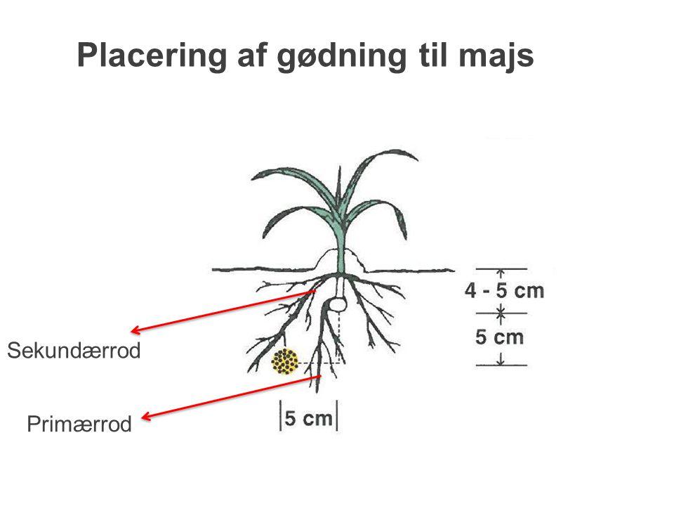 Placering af gødning til majs