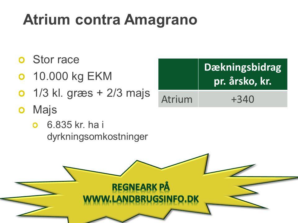 Atrium contra Amagrano