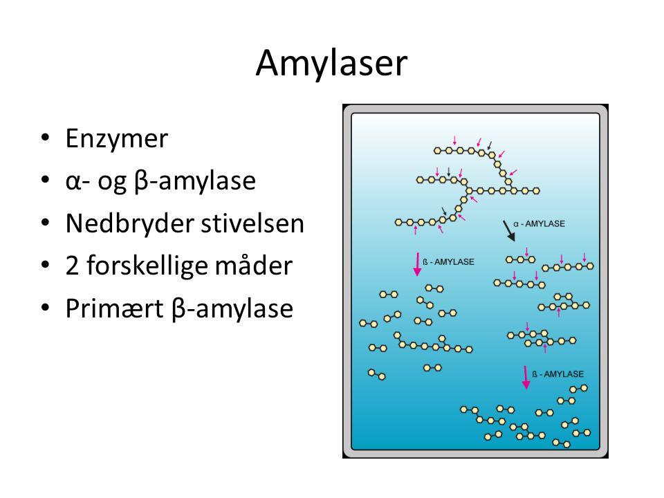 Amylaser Enzymer α- og β-amylase Nedbryder stivelsen