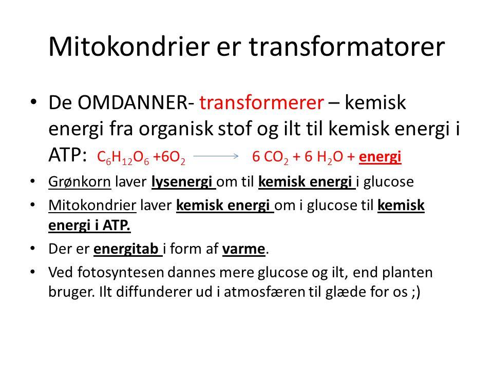 Mitokondrier er transformatorer