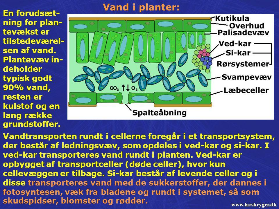 Vand i planter: