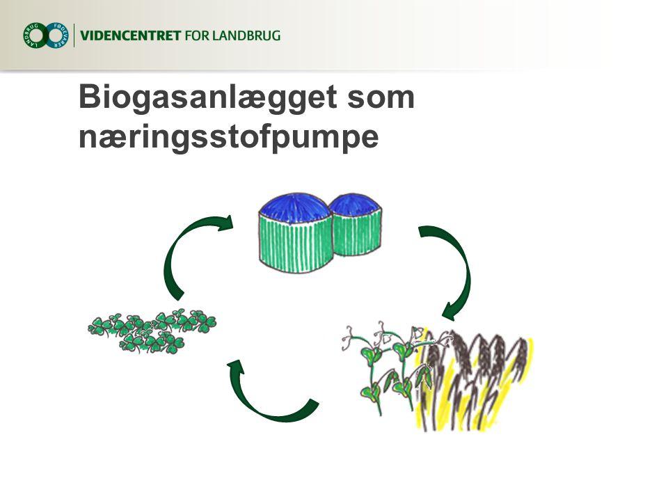 Biogasanlægget som næringsstofpumpe