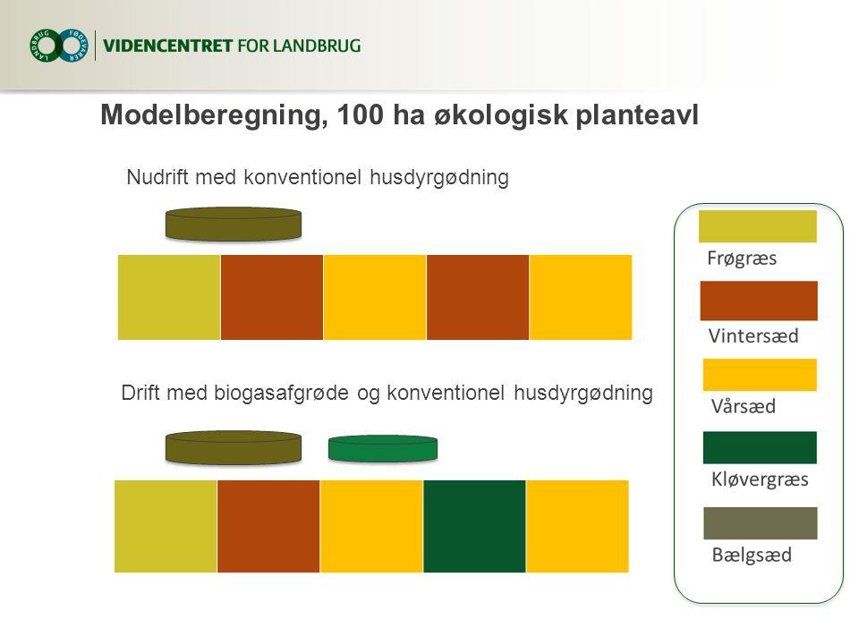 Modelberegning, 100 ha økologisk planteavl