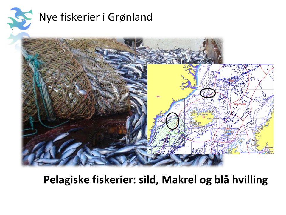 Nye fiskerier i Grønland