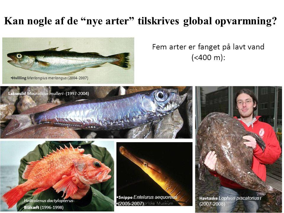Fem arter er fanget på lavt vand (<400 m):