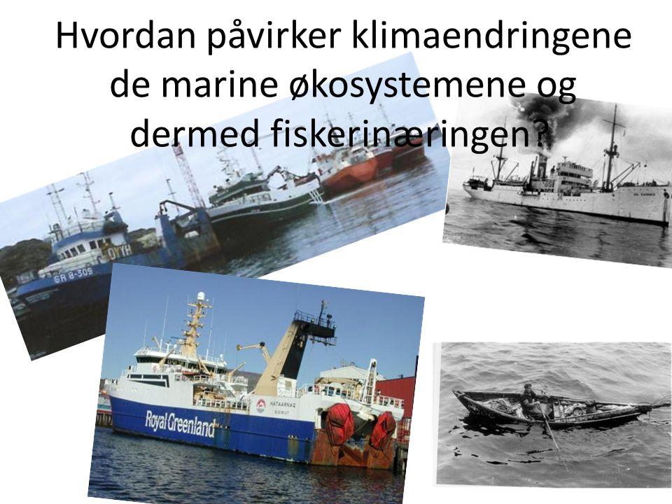 Hvordan påvirker klimaendringene de marine økosystemene og dermed fiskerinæringen