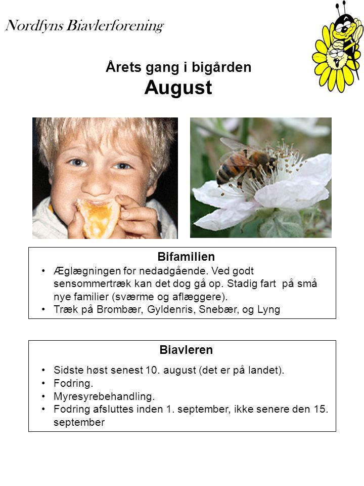 Årets gang i bigården August