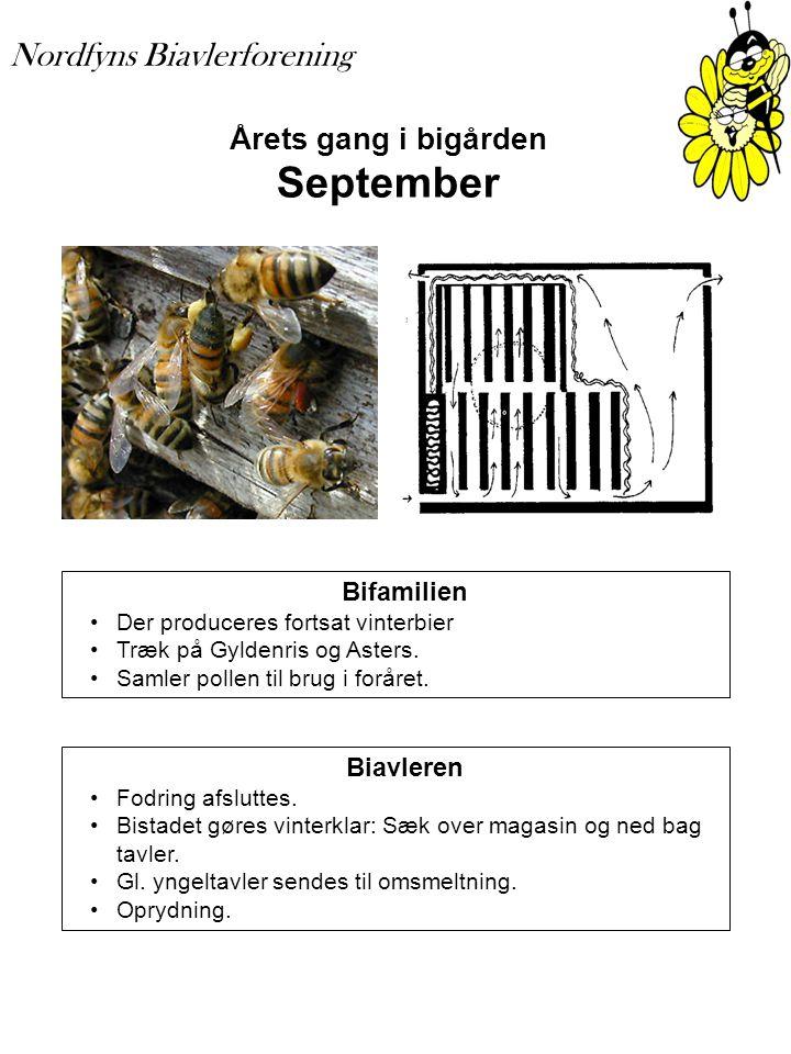 Årets gang i bigården September