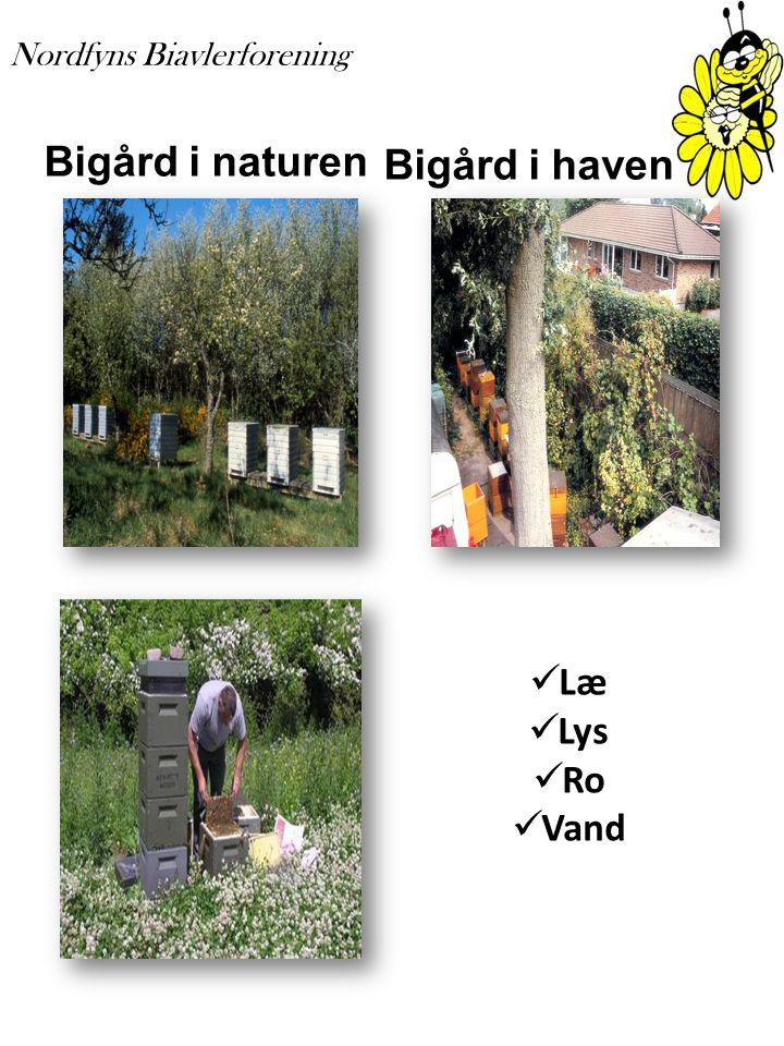 Bigård i naturen Bigård i haven