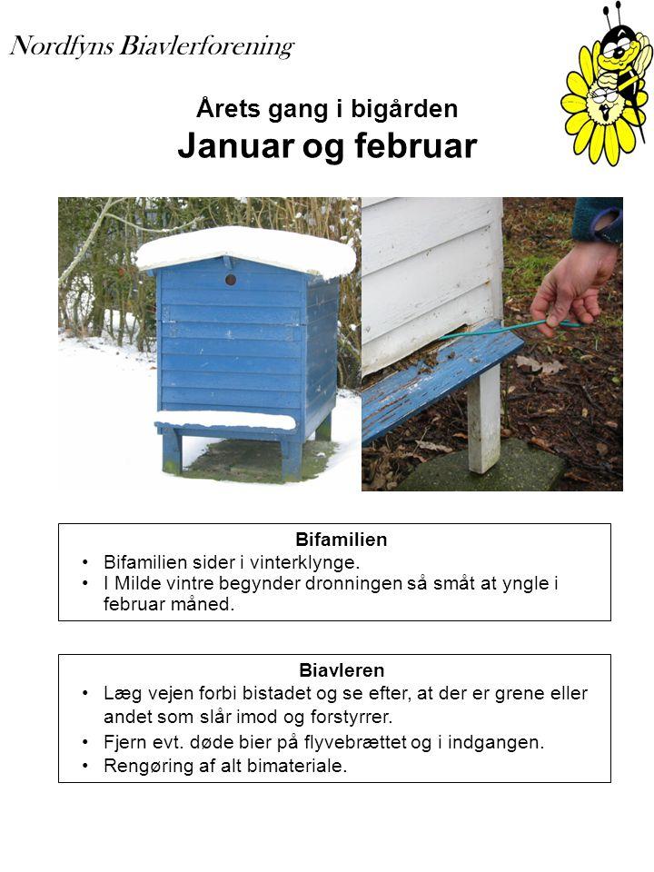 Årets gang i bigården Januar og februar