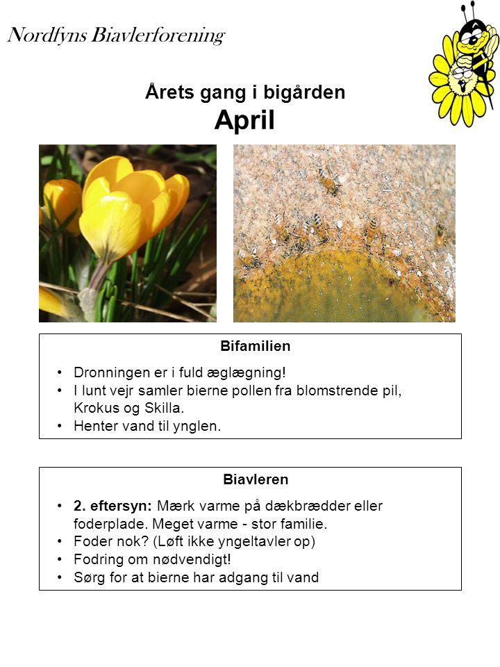Årets gang i bigården April