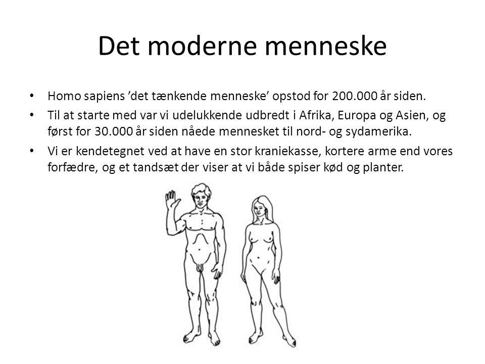 Det moderne menneske Homo sapiens 'det tænkende menneske' opstod for 200.000 år siden.