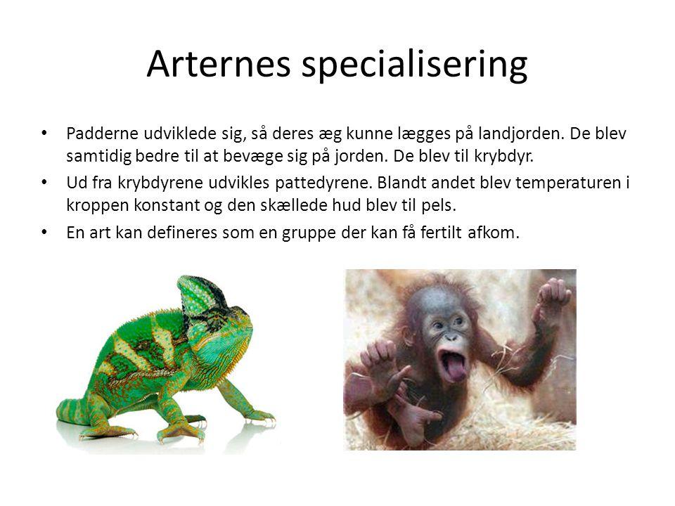 Arternes specialisering