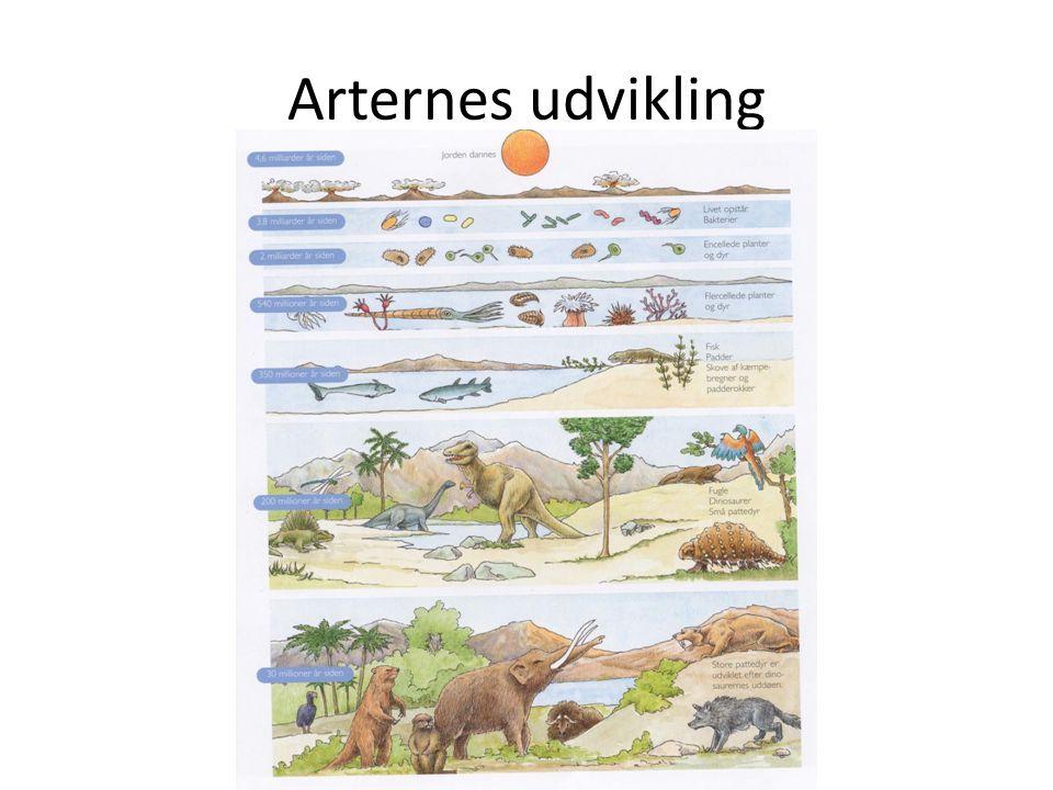 Arternes udvikling