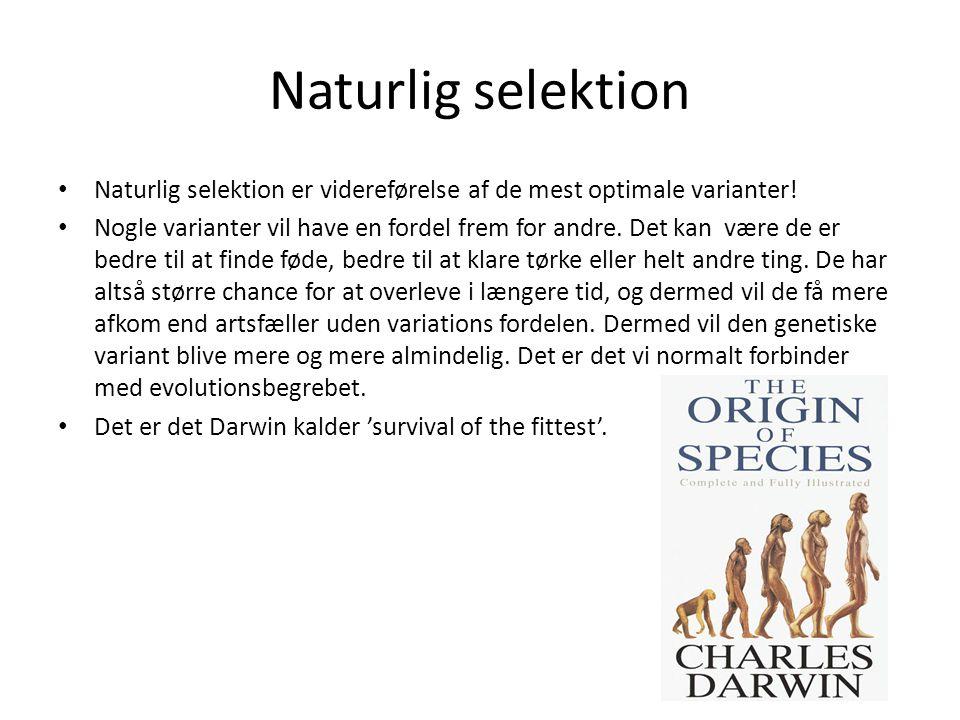 Naturlig selektion Naturlig selektion er videreførelse af de mest optimale varianter!