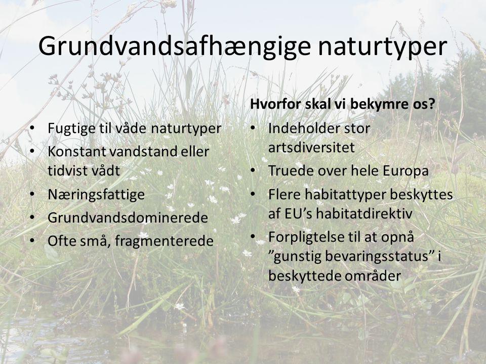 Grundvandsafhængige naturtyper
