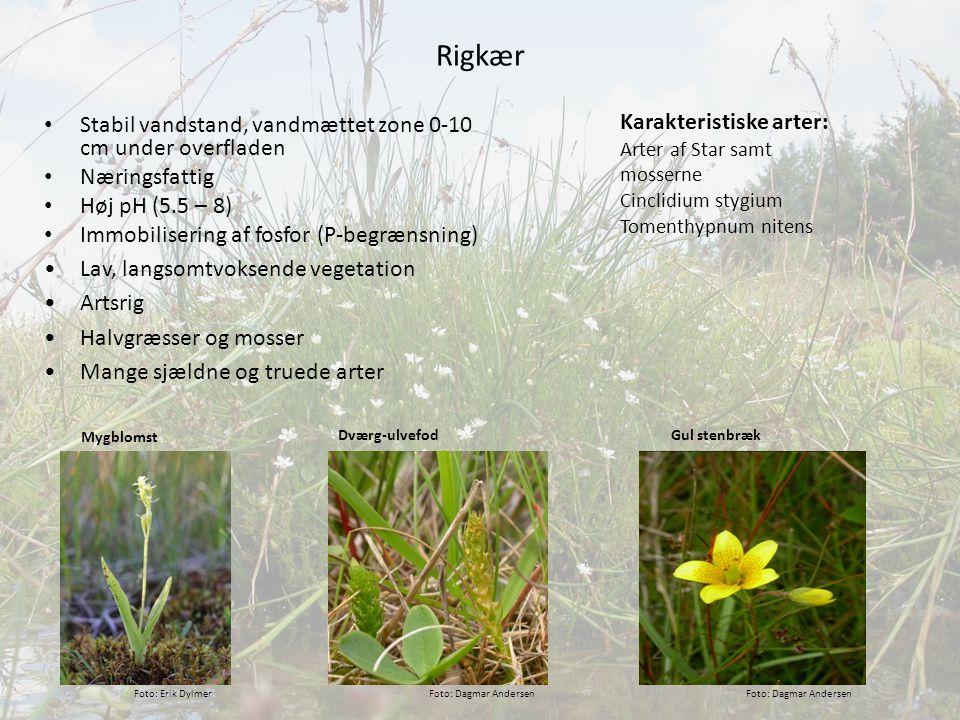 Rigkær Karakteristiske arter: