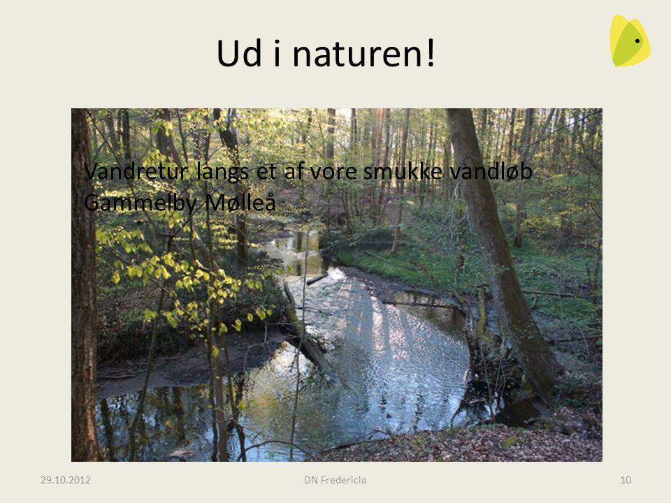 Ud i naturen! Vandretur langs et af vore smukke vandløb