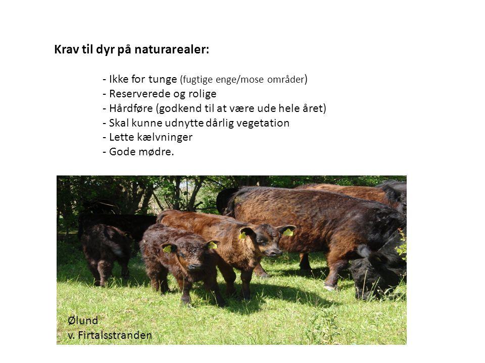Krav til dyr på naturarealer: