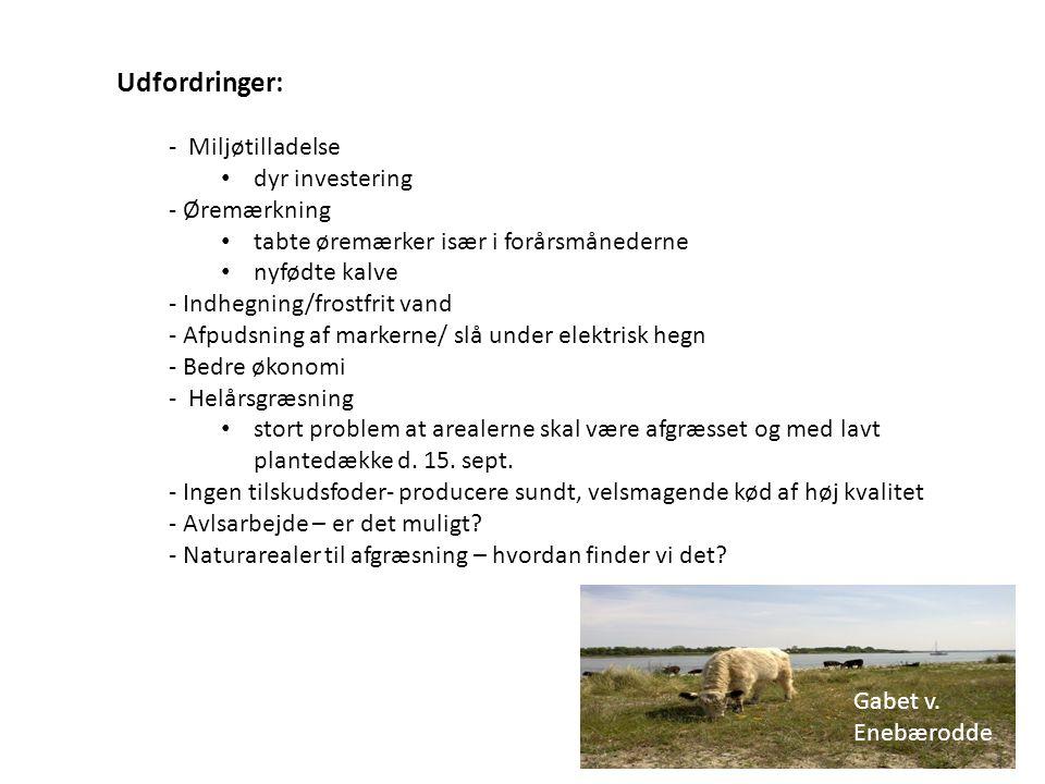 Udfordringer: - Miljøtilladelse dyr investering - Øremærkning
