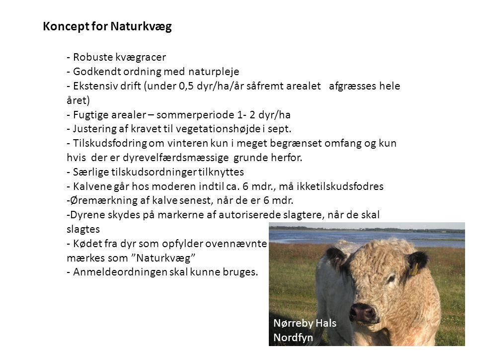 Koncept for Naturkvæg - Robuste kvægracer