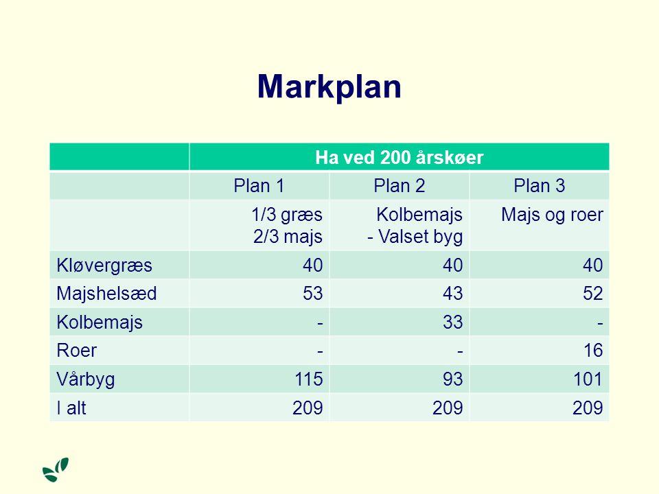 Markplan Ha ved 200 årskøer Plan 1 Plan 2 Plan 3 1/3 græs 2/3 majs