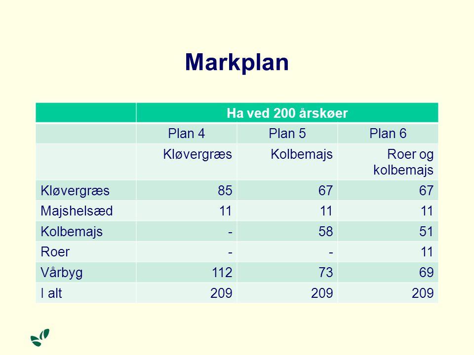Markplan Ha ved 200 årskøer Plan 4 Plan 5 Plan 6 Kløvergræs Kolbemajs