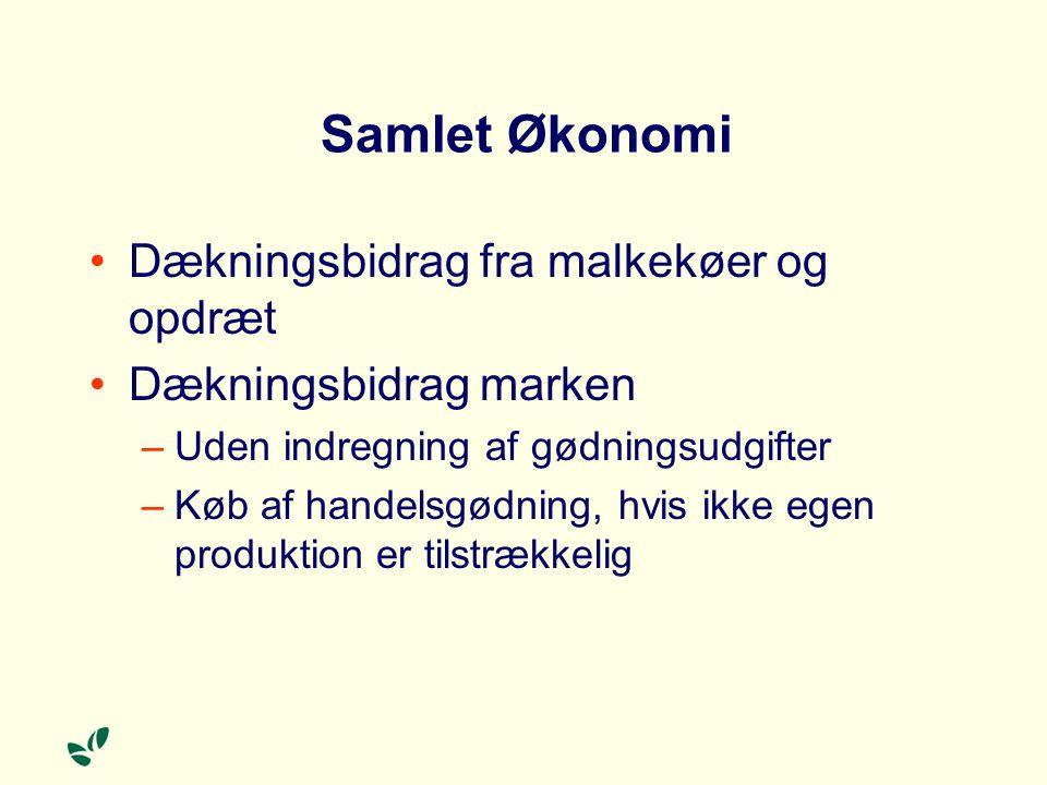 Samlet Økonomi Dækningsbidrag fra malkekøer og opdræt